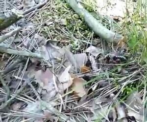 Epicka bitwa chrząszcza z mrówkami