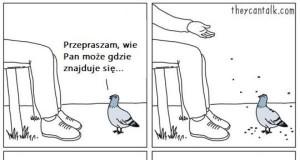 Typowy dzień z życia gołębia