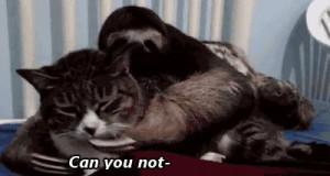 Strzeż się leniwców