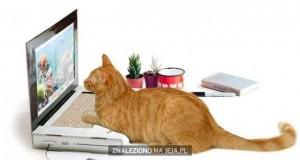 Laptop dla kota