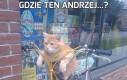 Gdzie ten Andrzej...?