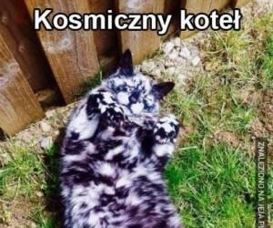 Niesamowity kot