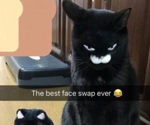 Idealna zamiana twarzy