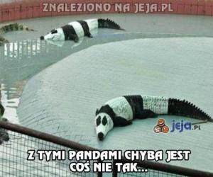 Jakieś dziwne te pandy...