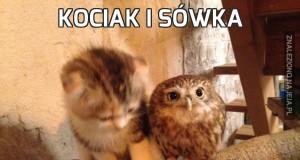 Kociak i sówka