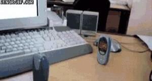 Walka telefonów