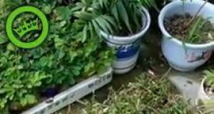 Strachliwe roślinki