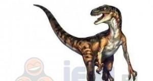 Dino-działanie