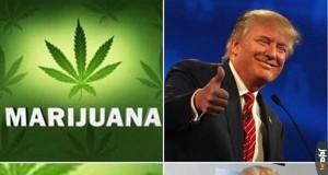 Nie będzie legalizacji