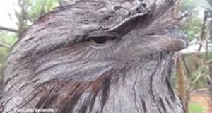 Ten wzrok
