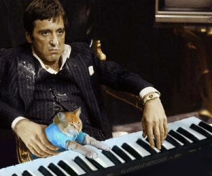 Tony z kociakiem