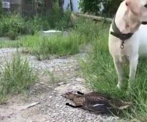 Huraaa, nie zjadł mnie!