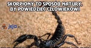 Skorpiony to sposób natury, by powiedzieć człowiekowi, że...