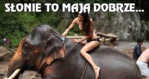 Słonie to mają dobrze...