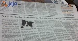 Psi artykuł