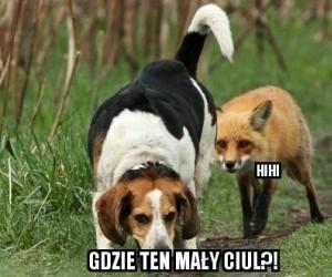Co to za pies myśliwski?!