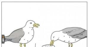 Mewy takie są