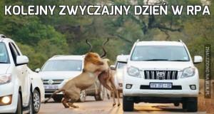 Kolejny zwyczajny dzień w RPA