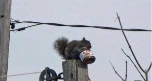 Skarb wiewiórki