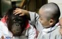 Nie smuć się małpko