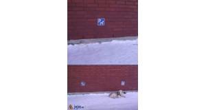 Parking dla psów