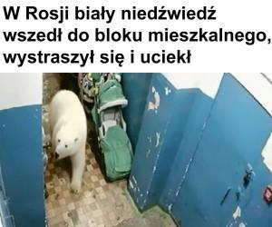 Taki tam niedźwiadek, normalka