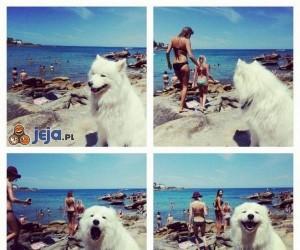 Pies, który zna się na rzeczy