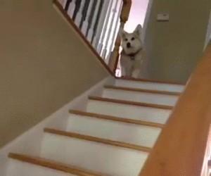 Krótkie nóżki + schody