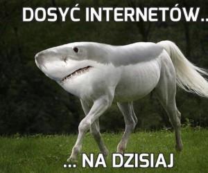 Dosyć internetów...