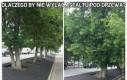 Dlaczego by nie wylać asfaltu pod drzewa?