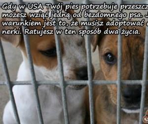 Nerka dla psa - Uratuj dwa życia