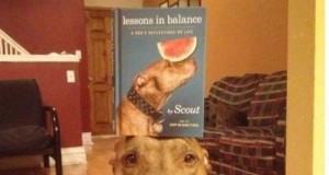 Zbalansowany pies