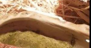 Teraz wiecie, jak wygląda pijący wąż