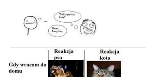Pies czy kot?