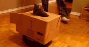 Koteł czołgista!
