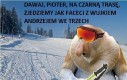 Odważny Janusz na nartach