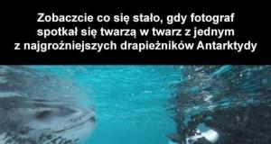 Spotkanie z lampartem morskim