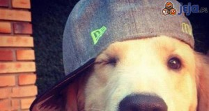 Niebywale fotogeniczny pies