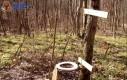 Leśna toaleta