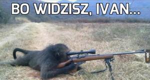 Strzelające małpy