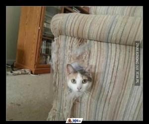 Koty - zwierzęta, które zabijają dla zabawy