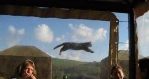 Nyat cat na żywo