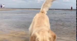 Pieseł nie ogarnia, jak działa morze
