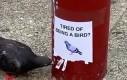 Ptaki zmęczone byciem ptakami