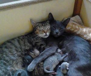 Szczęśliwa rodzinka
