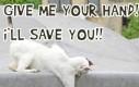 Kot ratownik