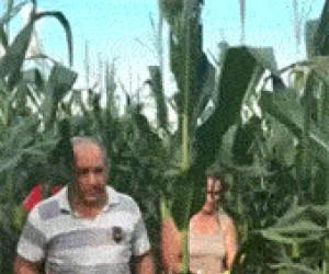 GMO wymyka się spod kontroli!