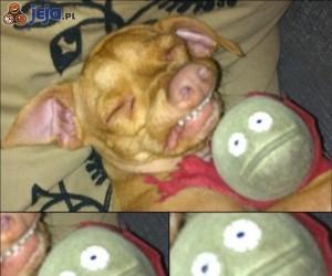 Pies i jego piłeczka