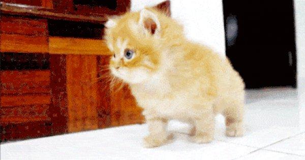 живые картинки гифы с маленькими котятами пятна, хорошая