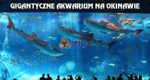 Gigantyczne akwarium na Okinawie